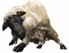 Category-Sheep.jpg