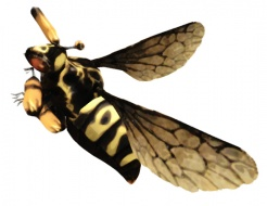 Category-Bee.jpg